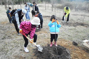 Planting an apple tree