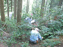 Survey underway in a hinoki cypress grove